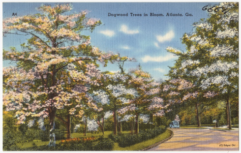 Since it's inception, Trees Atlanta has planted over 100,000 trees.